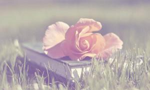 book_of_rose_flower_pink_soft_nature_hd-wallpaper-1562660